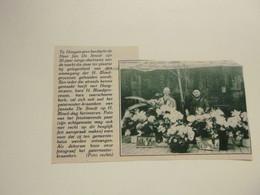 """Origineel Knipsel ( 9387 ) Uit Tijdschrift """"  Katholieke Illustratie """" 1931:    Hoogstraeten   Hoogstraten - Non Classificati"""