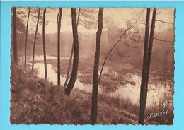 40-----LES LANDES EN GASCOGNE--paysage En Hiver--voir 2 Scans - Unclassified