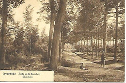 CPA / PK / AK   -  AVERBODE   Zicht In De Bosschen  -  Sous-bois ( Chasseur ) - Scherpenheuvel-Zichem