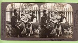 Enfant Et Chien à Table : Déjeuner, Ready For Breakfast - Photo Stéréoscopique- American Stereoscopic New York - 2 Scans - Stereoscopic