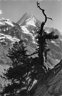 Lötschental Fafleralp Das Bietschhorn - VS Wallis
