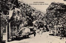 Martinique - Saint-Pierre - Avenue Principale Du Jardin Des Plantes - Other
