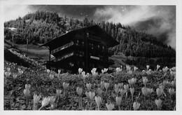 Hotel Alpenrhue Mürren - BE Berne