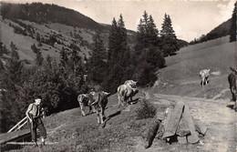 Morgins Col De L'Abérieux - Troupeau De Vaches - Garçon D'alpage - VS Wallis