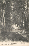België - Westmalle - Het Wit Bosch - 1908 - Zonder Classificatie