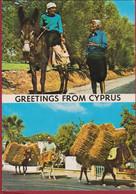 Greetings From Cyprus Postkard Ezel Donkey Ane CPA - Cyprus