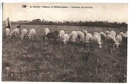 PLATEAU DE MILLEVACHES - Gardeuse De Moutons - Unclassified