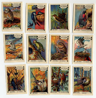 Meurisse - Ca 1930 - 56 - Oiseaux Et Leurs Nids, Birds And Their Nests - Full Serie - Sonstige