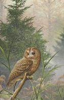 BUZIN. CHOUETTE HULOTTE - Birds
