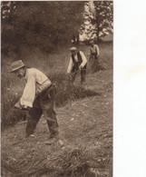 L AUVERGNE 13 CPA  PERSONNAGES  JOLIE LOT - 5 - 99 Postkaarten