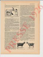 3 Vues Presse 1926 Chèvre Animal Allaitement De Bébé Au Lait De Chèvres 146/5 - Zonder Classificatie