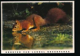 Eerbeek - Coldenhove - Eekhoorn - Squirrel [Z19-0.581 - Zonder Classificatie
