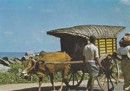 SRI LANKA,CEYLAN,CEYLANAIS,CEYLON,ATTELAGE - Sri Lanka (Ceylon)