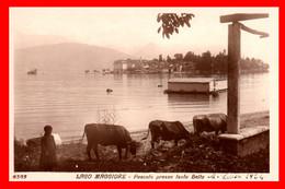 ITALIA- LAGO MAGGIORE LOMBARDIA VARESE TARJETA POSTAL - MUY ANTIGUA - Varese