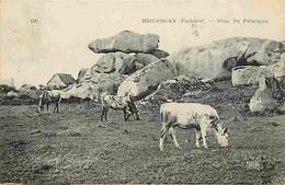 29 - Brignogan - Dans Les Paturages - Vaches - Oblitération Ronde De 1922 - CPA - Voir Scans Recto-Verso - Brignogan-Plage