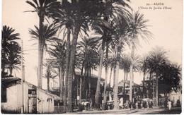 ALGER -  L'OASIS DU JARDIN D'ESSAI - Algiers