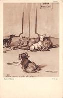 Animaux - N°69884 - Chiens - Boris O'Klein - Pour Nous Pas Place - Perros