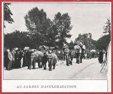Défilé D'éléphant Au Jardin D'Acclimatation. Paris. Vue Animée. Atlas Larousse 1900. - Documenti Storici