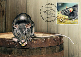 Estonia - 2020 - Estonian Fauna – Black Rat - Maximum Card - Estonia
