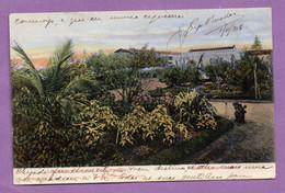 Afrique Mozambique Lourenco Marques Delagoa Bay Jardin 1906 - - Mozambique