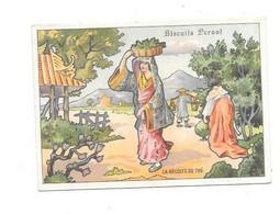 11887 - Chromo Biscuits PERNOT : La Récolte Du Thé, - Pernot