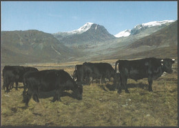 Greenland - Agriculture In Greenland, Postcard Without Stamp, 2012 - Hoftiere