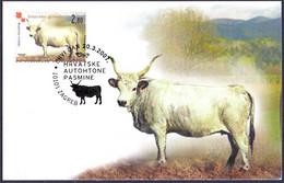 Croatia - Istrian Ox, Maximum Card, 2007 - Hoftiere