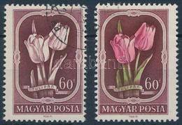 O 1951 Virág 60f Zöld és Piros Színnyomat Nélkül + Támpéldány (70.000) / Mi 1210 Green And Red Colour Omitted - Sin Clasificación