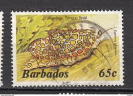 ##33, Barbades, Barbade, Barbados, Snail, Escargot - Barbados (1966-...)