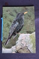 V-213/ Vogel-Oiseaux- Farbaufnahme Friedemann Popp ( FF 409 ) / Amsel - Merle Noir - Blackbird - Birds