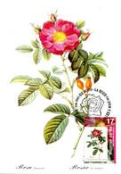 15197081 BE 19970707 Bx; Roses; Rosa Damascena Coccinea, Rosier De Cels; CM Cob2708 - Rosas