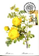 15197082 BE 19970707 Bx; Roses; Rosa Sulfurea, Rosier Jaune De Soufre; CM Cob2709 - Rosas