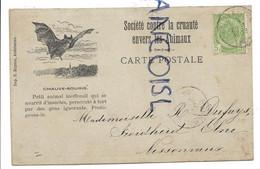 Bat / Chauve-souris. Société Contre La Cruauté Envers Les Animaux. 1904. - Other