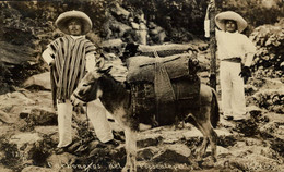 REAL PHOTO POSTCARD CARBONEROS DEL POPOCATEPELL MEXICO    ANES ANE DONKEY EZEL ESEL MULES Donkeycollection - Mexico
