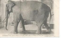 L'ELEPHANT FRITZ, MORT A TOURS, LE 11 JUIN 1902, OFFERT AU MUSEE DE TOURS, PAR LE CIRQUE BARNUM - Tours