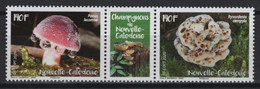 New Caledonia (2020) - Set -  /  Mushrooms - Funghi - Champignons - Setas - Champignons
