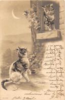1902 Carte Précurseur, Chats. La Scène Du Balcon TBE 2 Scans - Katten