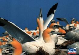 CPM - Réserve Ornithologique Sept-Iles PERROS-GUIREC - Fou De Bassan Macareux Moine … Lot De 2 Cartes - Pájaros