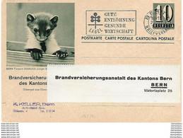 160 - 10 -  Entier Postal Privé Brandversicherung Des Kantons Bern - Illustration Bern Tierpark 1964 - Stamped Stationery