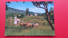 Bela Krajina.Narodne Nosa.National Costumes - Slovenië
