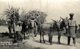 BARBADOS LOAD SUGAR CANE SEE BACK PHOTO   ANE DONKEY EZEL ESEL MULES Donkeycollection - Ambachten
