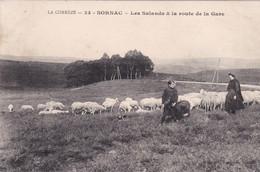 Sornac Les Salands - Altri Comuni