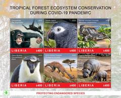 LIBERIA 2020 SOUVENIR SHEET - CHIMPANZE CHIMPANZEE APES MONKEYS - FOREST CONSERVATION DURING COVID-19 PANDEMIC - MNH - Chimpanzees