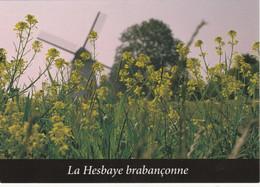 La Hesbaye Brabançonne, Incourt - Chantal Gras -> Ne Pas écrit - Incourt