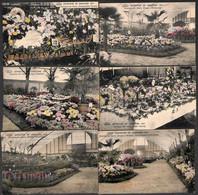 Exposition De Charleroi 1911 - Concours De Fleurs - Lot 6 Cartes Colorisée Phototypie Préaux Frères (peu Vue) - Charleroi