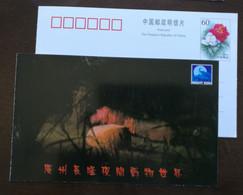 Hippopotamus,hippo,China 2001 Guangzhou Changlong Night Zoo Advertising Pre-stamped Card - Gufi E Civette