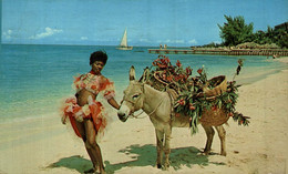 One Of The Stars Of The Native Floor Shows In Jamaica With Charlie         BURRO ANE DONKEY EZEL ESEL Donkeycollection - Esel