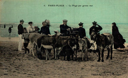 Paris Plage La Plage Par Grosse Mer  BURRO ANE DONKEY EZEL ESEL Donkeycollection - Burros