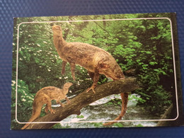 Dinosaur Serie ,  Jurassic Period - Modern Russian Postcard - Altri