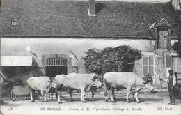 CPA CHARTRES  28:   Environs - Attelage De Boeufs - Chartres